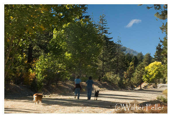 Walking a trail in Wrightwood