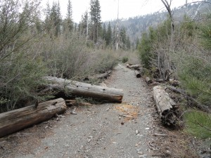 The old Prairie Fork Road as seen just upstream from Cabin Flat Campground.