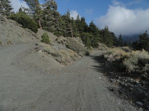 Road junction for the descent into Prairie Fork from East Blue Ridge.  Photo taken just past (east) Guffy Campground.