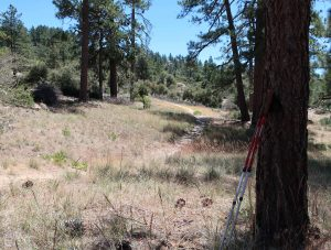 The Great Outdoors Report   1390 Hwy 2 PO Box 398 Wrightwood